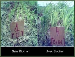 biochar_fr5